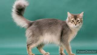 Different Types of Cat Breeds Part 2 #TypesofCats #CatsBreed
