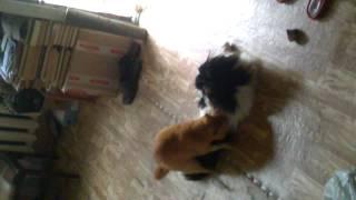 Кот насилует собаку!!!