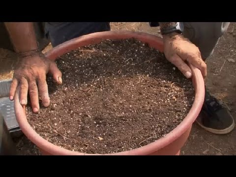 How to Make Soil for a Raised Bed Vegetable Garden Raised Bed