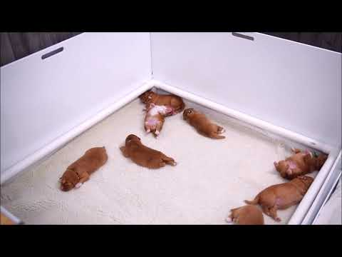 Deseree's Puppies Present: Twitchy Sleep