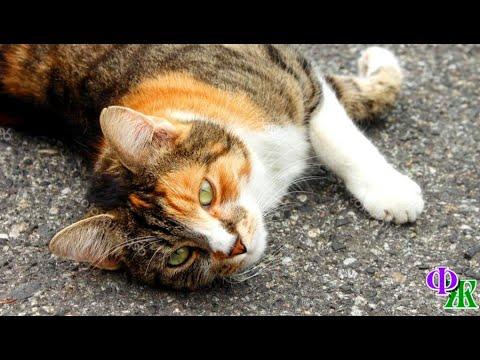 Вопрос: Почему, когда я ложусь на спину, кот приходит и топчется на моем животе?