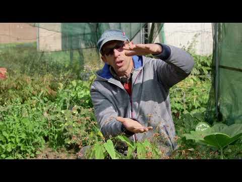 Nouveau film Jardin-Jardinier: parlons Epimedium