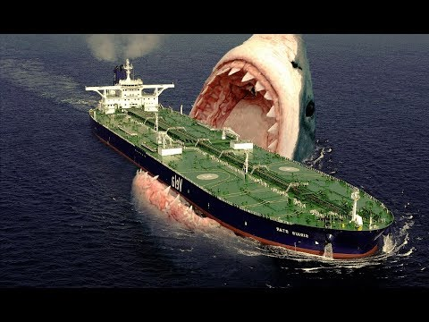 MOST Unbelievable Species of Sharks !