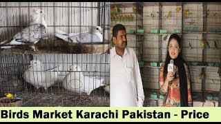 Pigeons Sale in Buffer Zone Birds Market - Karachi Pakistan