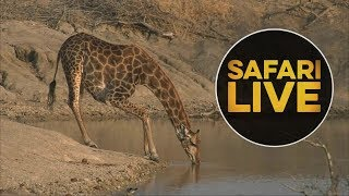 safariLIVE - Sunset Safari - August 2, 2018