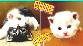 Cute Cats Vol.33  Funny Cat Videos 2021  Cute Cat Videos 2021