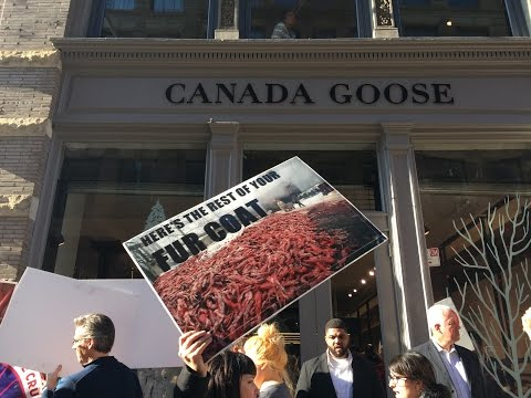 Canada Goose Grand Opening Protest