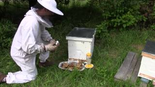 Using Lemongrass Oil When Beekeeping