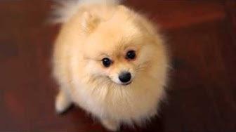 Maailman söpöimmät koirat