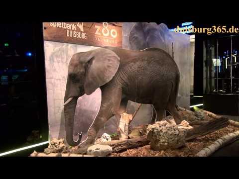 Elefantenstarke Partnerschaft zwischen Spielcasino & Zoo Duisburg
