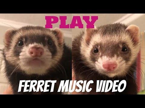 PLAY (ferret Music Video) - Black Gryph0n & Michelle Creber #FerretFridays