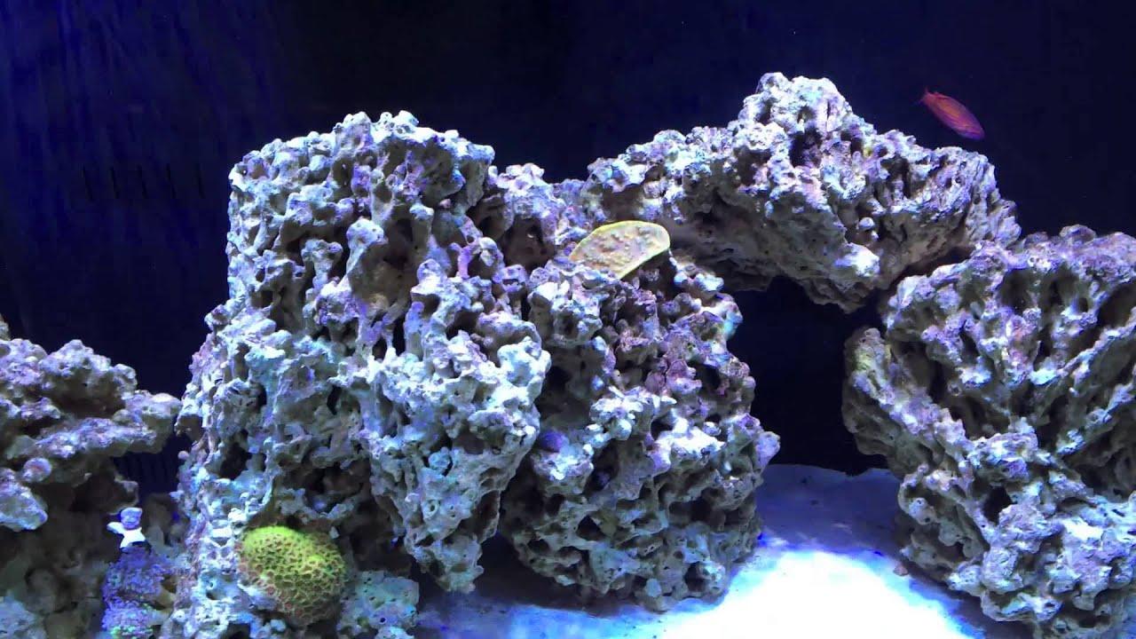 Reef Tank Update - Pukani Rock - YouTube