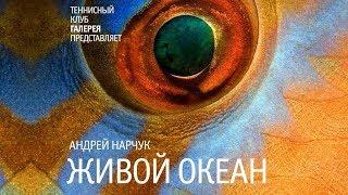 видео Подводный мир - галерея подводной фотографии.  Подводная фотосъемка,  подводное фото, фотография под водой, фотографии подводной охоты - Фотосайт funPhoto