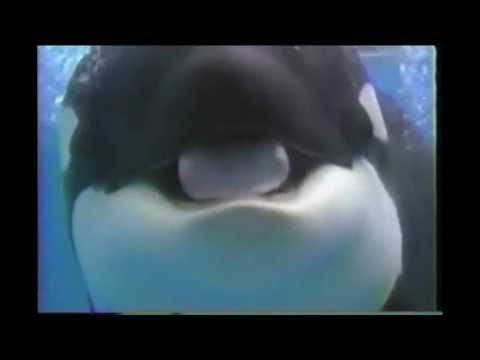 Sea World's Baby Shamu Celebration