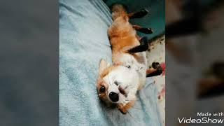 Фото лис: любовь к лисичкам!