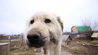 У бабушки 44 собаки! Строим вольер. 4 и 5 день.