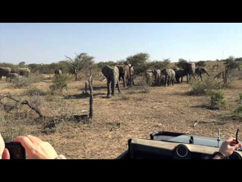 South Africa Game Drives May 2015