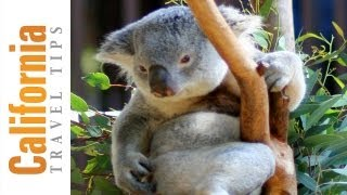 San Diego Zoo Travel Guide   San Diego Attractions   California Travel Tips