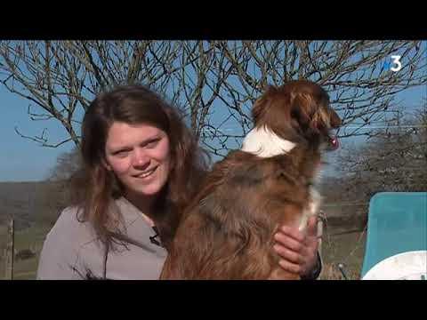 Un chien acteur de Haute-Vienne partenaire de jeu de Guillaume Canet