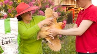 Cure mites & ticks on your chickens naturally.