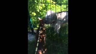 Кошка гладит собаку