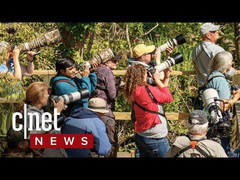 Birding Apps Take Flight (CNET News)