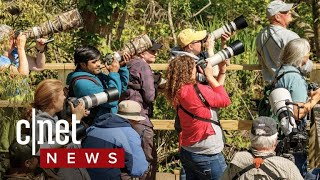 Birding apps take flight (CNET News)