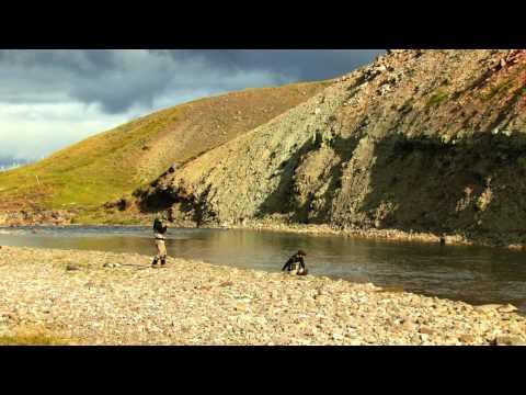 Fly Fishing the Midfjardara River for Atlantic Salmon - Promotional Video