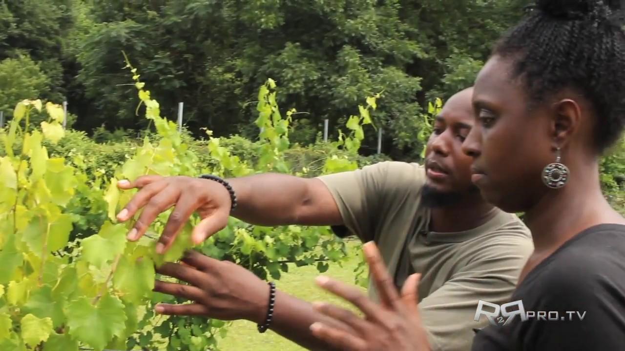 DC Organic Farming