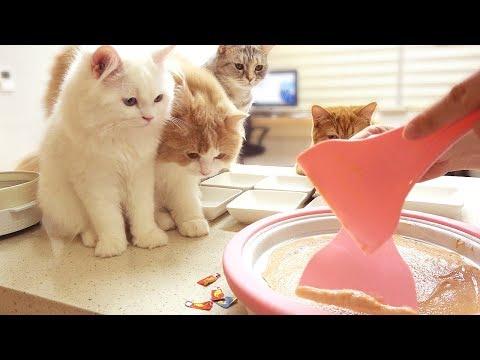 고양이 철판 아이스크림