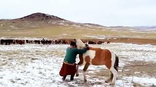 Mongolian Horsemen in action