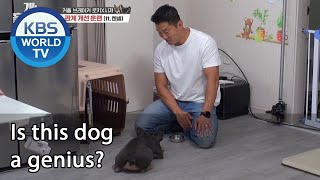 Is this dog a genius? (Dogs are incredible) | KBS WORLD TV 201028