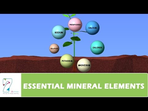 ESSENTIAL MINERAL ELEMENTS PART 02