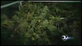 VALLEJO  Pot dispensary owner has marijuana returned, charges dropped