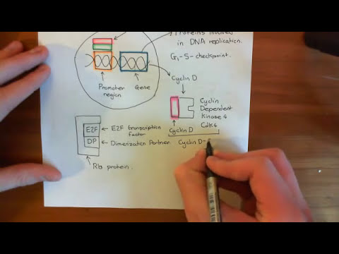 The Wnt / Beta-Catenin Pathway and Familial Adenomatous Polyposis Part 3