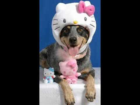 cute animals in costumes   youtube