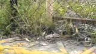 serpiente gigante en tlaxcala