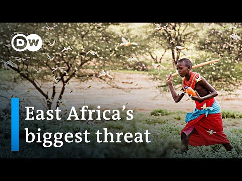 Worst locust outbreak in decades threatens East Africa | DW News