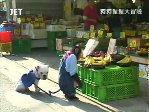 狗狗猩猩大冒險1 Episode 03