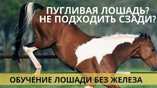 Видео-урок. Не подходить сзади к лошади(Семинар «Домашняя лошадь от А до Я» http://loshad.mypro100mag.com/q/main Любая лошадь может быть спокойной, ели её этому..., 2012-10-06T07:21:51.000Z)