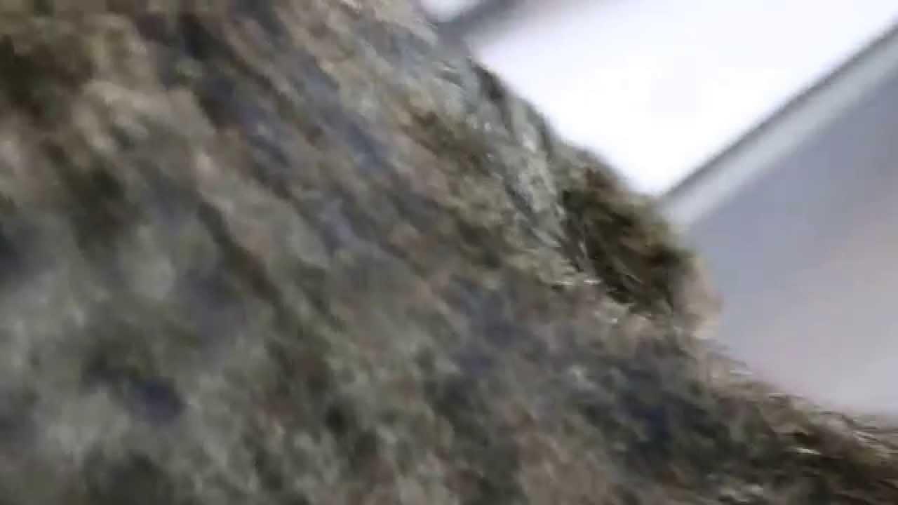 A Kitten Has Sore Anal Area - Youtube-6199
