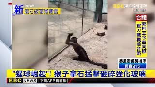 最新》《猩球崛起》!猴子拿石猛擊砸碎強化玻璃