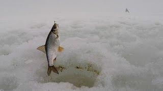 Зимняя рыбалка в Дубовском затоне. Самарская область..