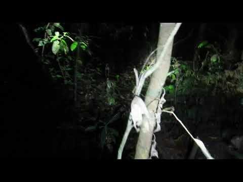 Costa Rica - Monteverde night hike