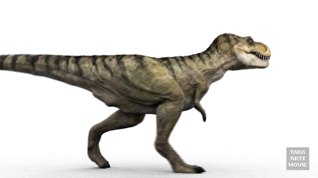 Dinosaurs T Rex 3d Animation Walk Cycle Rendertest Youtube