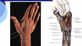 7 Summary of deep group muscle of back aspect of forearm