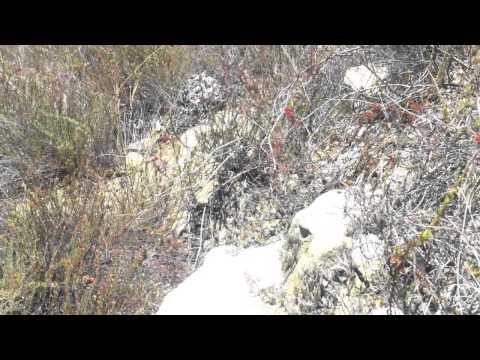 Western Prospecting -Prospecting Ain't Easy (Pt 2)