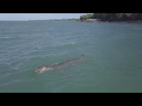 Drone Gets Up Close With Crocodile Snacking on Turtle