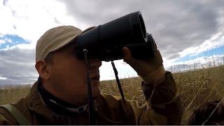 Охота на косулю осенью с подхода