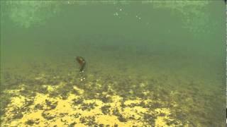 Sebile Magic Swimmer FSK video